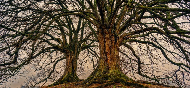 tree-3097419